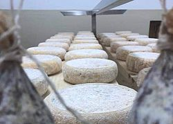 The cheese at Malga Fai in Paganella